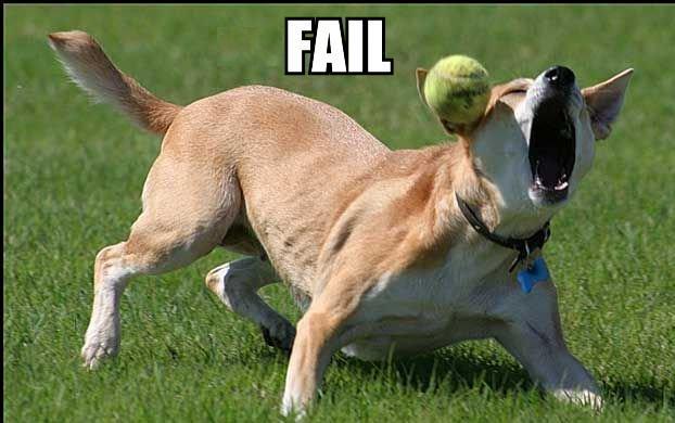 Tarddog in action