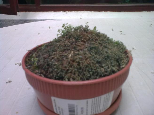 Botany - tricky