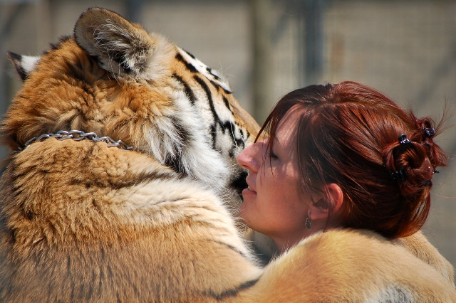 J-Rab and the Siberian Tiger Baloo share a moment